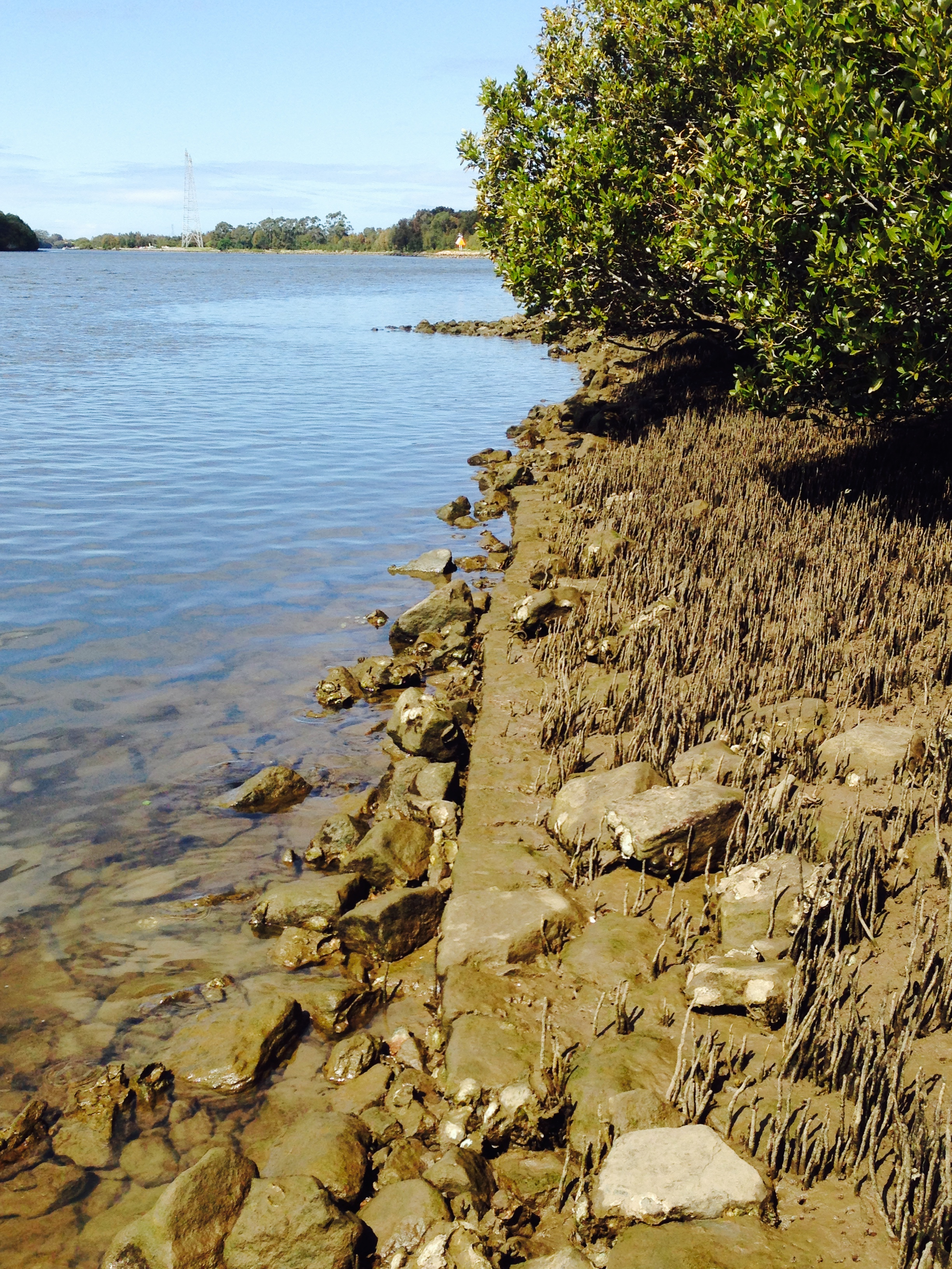 Remains of original river wall and possibly pier in distance. (Photographed September 2014 by Gionni Di Gravio)