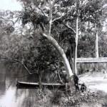 Image of Cockle Creek