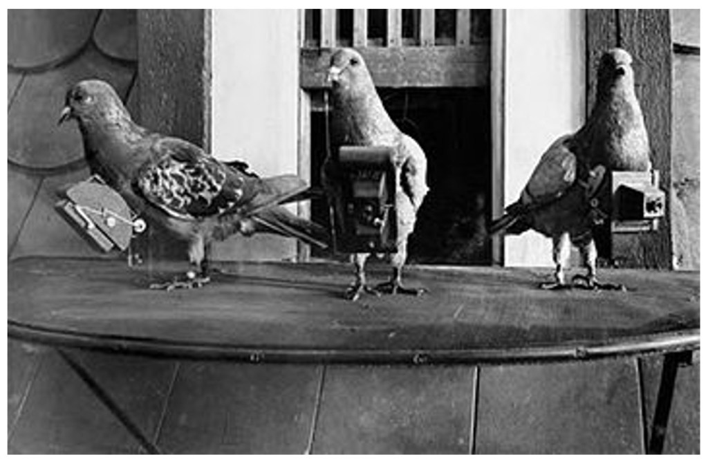 """""""Squadrons"""" of homing pigeons, each equipped with a single shot camera on a time-fuse."""